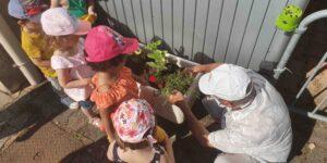 Plantation extérieur centre social
